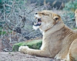 Zoo Hannover (13)