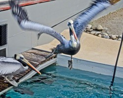 Zoo Hannover (19)