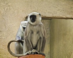 Zoo Hannover (22)