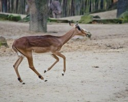 Zoo Hannover (3)