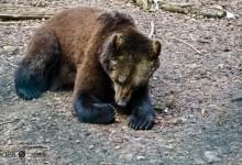 Der Alternative Bärenpark in Worbis