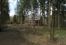 Einsam im Wald....Teil 2